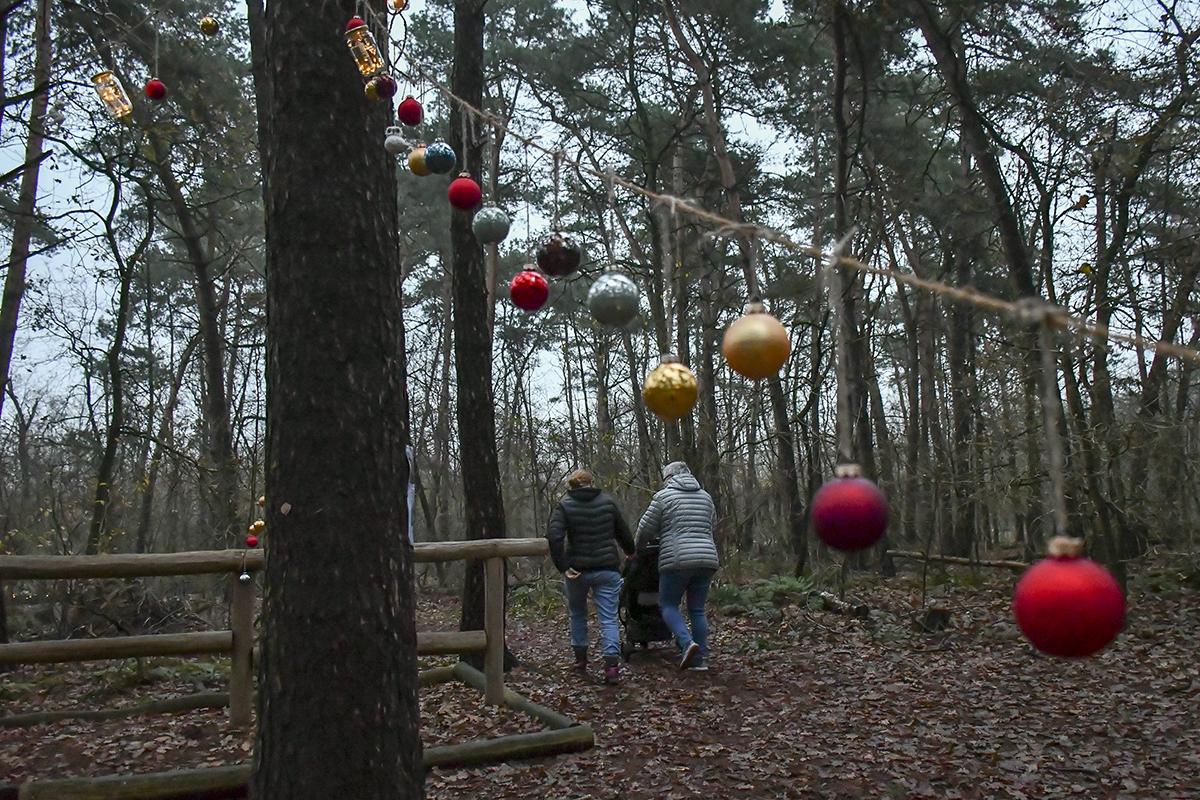 20-Winter-Weihnachts-Wald